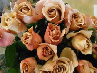 ジュリア ジュリアの香りがもたらす効果 [鎮静効果] [抗ストレス効果] 効果に... 花と緑の