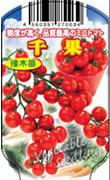 ミニトマト千果